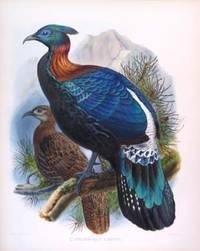 Lophophorus L'Huysii